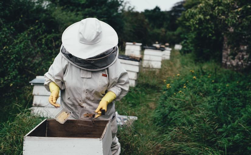ミツバチをAIで守る!ダニの発生を画像認識AIで監視するプロジェクト   Ledge.ai