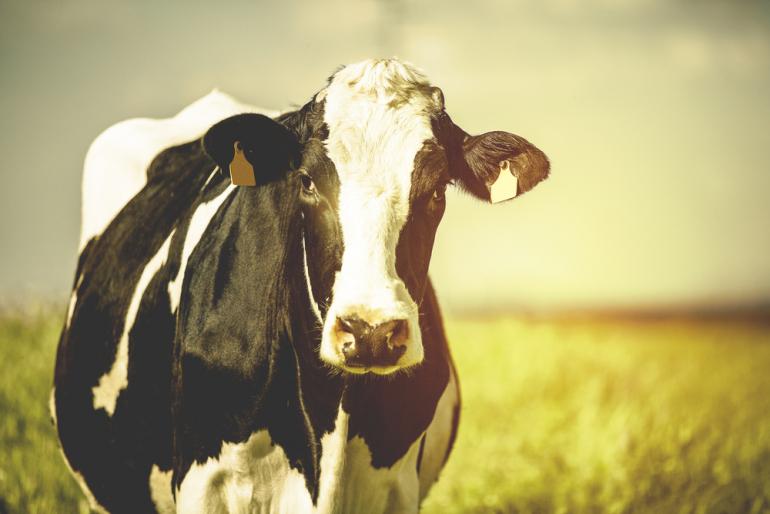日本初、牛の尻尾の動きで分娩兆候を検知!デザミス・NTTテクノクロス共同開発した牛の分娩アラートサービス|@DIME アットダイム