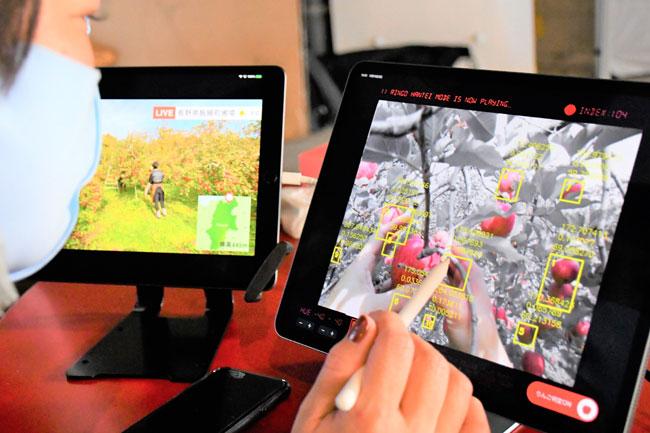 食べ頃AI判別 オンライン収穫 農家視点も味わう 技術継承用のシステム活用 凸版印刷(日本農業新聞) - Yahoo!ニュース