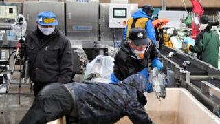 定置網の魚種をAIが自動判別 青森産技が実証実験