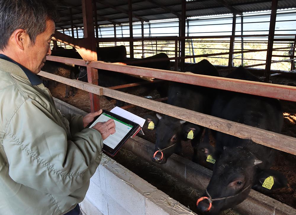 和牛の繁殖「スマート化」 クラウドでカルテ共有 発情・出産、スマホに通知