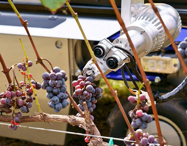 日本農業新聞 - 無人走行車両+ロボットアーム 醸造用 ブドウ 自動で収穫 ヤマハ発動機 実証試験